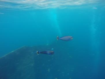snorkelingàmed