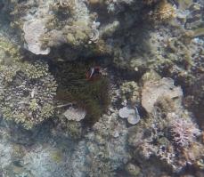 snorkel nido2