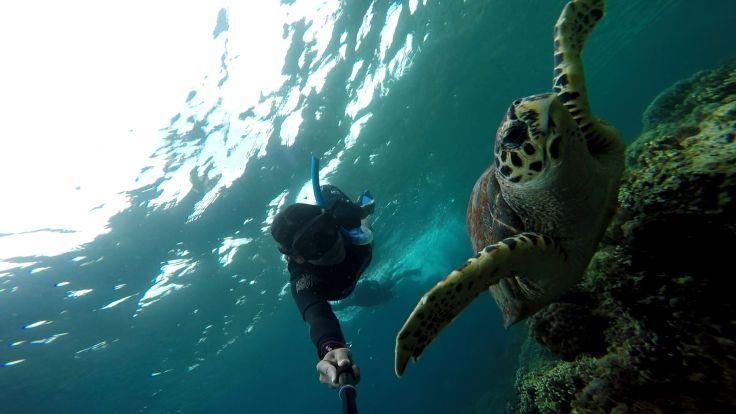 turtle-moalboal