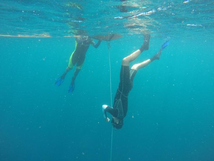 freediving-moalboal